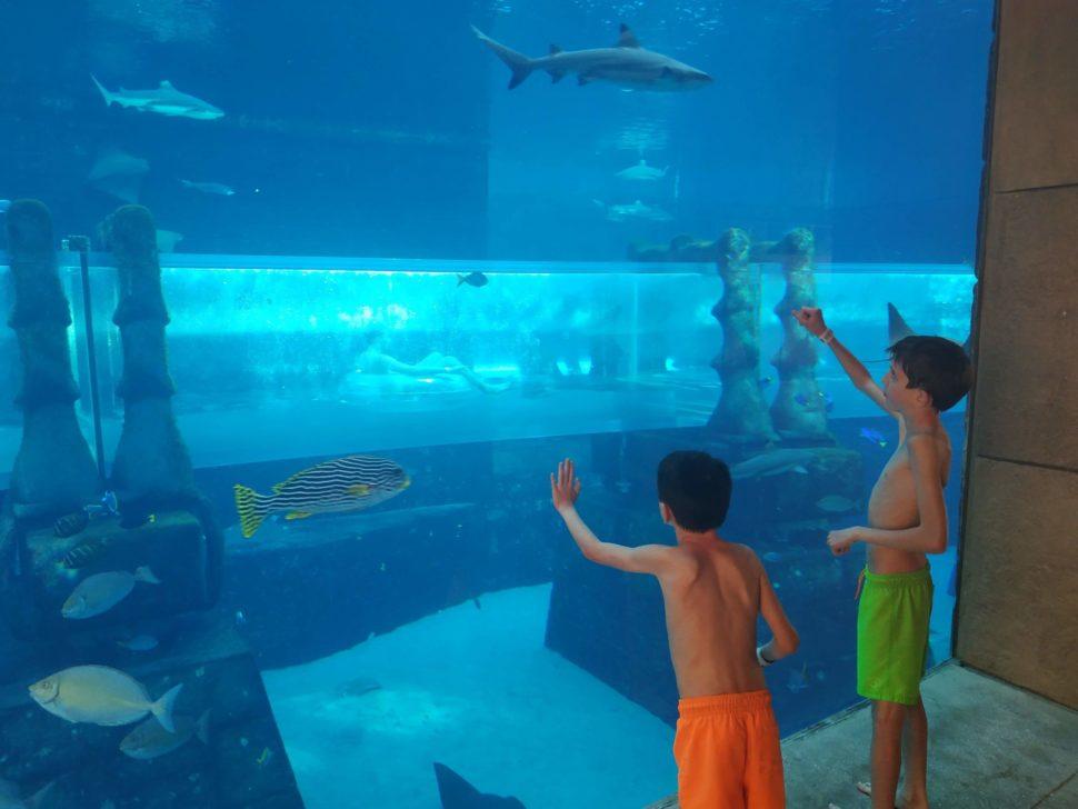 Atlantis the Palm Hotel Dubai, Aquaventure Waterpark