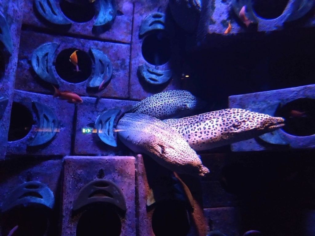 Atlantis Dubaj Aquaventure Aquapark